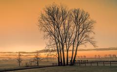 Birds in a tree (Jorden Esser (on a break)) Tags: birds fence frost hss orange sliderssunday sundawn sunrise tree trees