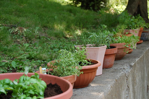 Easy Gardening Tips for Growing a Simple Garden Easy Gardening Tips for Growing a Simple Garden thyme isn t that sweet