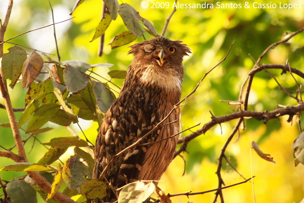 FISH OWL_MG_1400_F