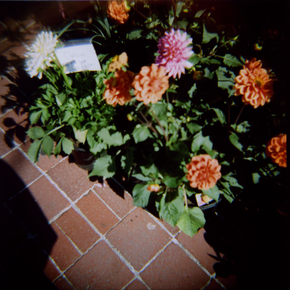 flower & bricks