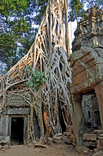 city trip travel people holiday tree history stone temple ancient nikon ruins asia cambodia published tour strangler fig buddhist free tourist unesco worldheritagesite monastery dennis siemreap taprohm wonders sites globus d300 iamcanadian seimreap worldtravels dennisjarvis archer10 dennisgjarvis