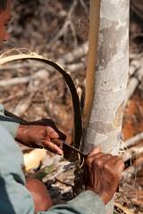 Extracting Katafray