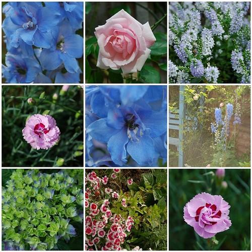 Garden June 2009