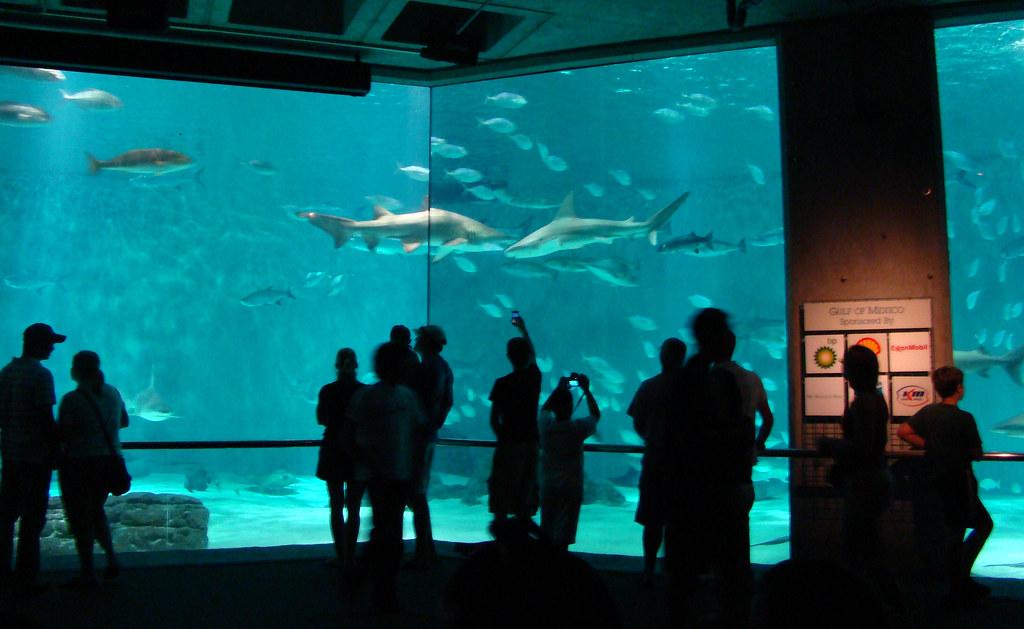 DSC06318 audubon aquarium sharks