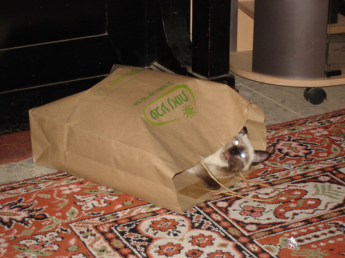 The paper bag chew toy
