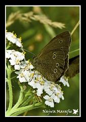 Day 2: Butterfly (Najwa Marafie - Free Photographer) Tags: trip vacation butterfly sweden finepix fujifilm 2009 najwa s5pro nonoq8 marafie