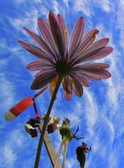 Ese cielo azul no es cielo ni es azul (Pabloveg) Tags: chile work photography arte medicina fotografia viadelmar chilecambio pabloperezcastro