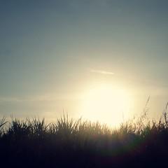 (Syka L Vy) Tags: trees light sky sun smile waiting sunny sugar vietnam vy dreamer 2009 sunnyday sleepwalker l keepsmiling syka vng mydaywillcome fromsykawithlove daysstillgoon sykalevy lehoangvy sundayspirit