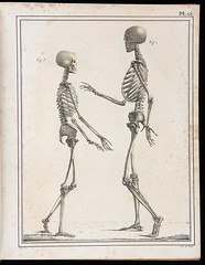 Two Skeletons (ChrononautClub) Tags: antiquebooks medicalillustrations vintageengraving