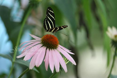 butterfly2web
