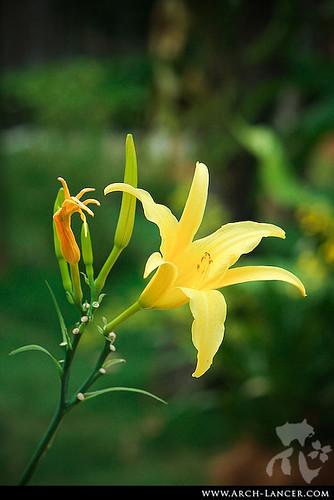 P_flower22