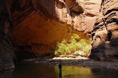 Average depth (AMcElrone) Tags: park red tree rock river flora canyon virgin national zion narrows