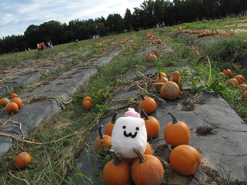 Tofu Baby at the pumpkin patch.