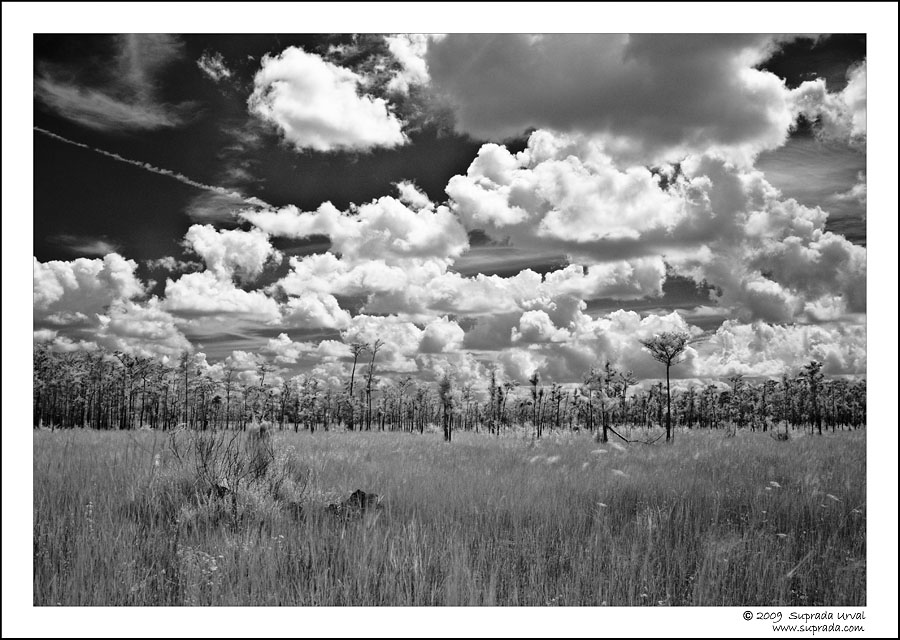 Everglades in Infrared - 2