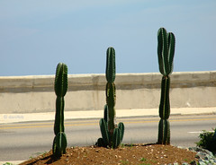 Cactus sul Malecn - Havana, Cuba (danifeb) Tags: road sea cactus sun nature mar office strada mare suiza havana cuba carribean oficina embassy unite malecon states habana svizzera ufficio uniti circolo malecn caribe estados caraibi interessi embajada unidos fotografico stati avana ambasciata inters micromosso flickraward interess circolomicromosso