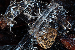 Cold Collage (AnyMotion) Tags: winter abstract macro ice nature leaves garden frankfurt natur makro eis bltter garten 2010 abstrakt iceart anymotion canoneos5dmarkii 5d2