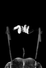 The Space In Between Is A Spiral (G. Lang) Tags: blackandwhite makro macromondays thespaceinbetween schwarzweis defekterzündereinerleuchtstoffröhre noiretblanc monochrome fusibledéfectueuxuntubefluorescent einfarbig branches bw tamronaf90mm128macro11 blackwhite defectiveigniterofafluorescenttube macro sonyilce7m2