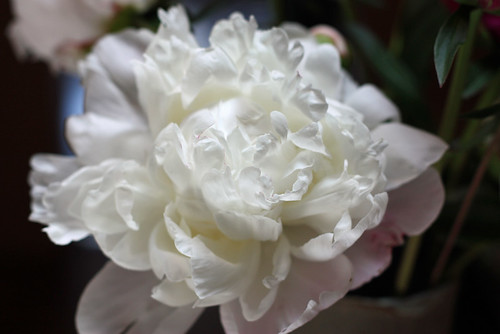 I never get tired of peonies.