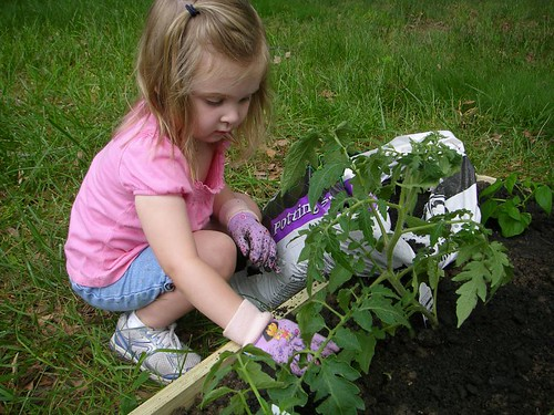 Elise planting tomatoes
