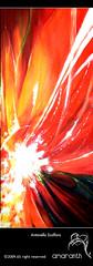 polline (amaranth_) Tags: red flower macro art primavera illustration contrast painting creativity graffiti paint magenta giallo movimento fiori astratto fiore colori bianco arancio luce amaranth primopiano velocit antonella vivace passione tela acrilico sensazioni particolare contrasti contrasto intenso nucleo polline fusione interiore ardere infuocarsi