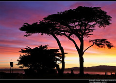Cypress Trees Sunrise PSIMG_3794crop (Tom DiMatteo) Tags: pictures california travel seascape colors silhouette architecture tom sunrise canon austin wonderful landscape photography coast photo monterey interiors texas photographer pacific image time grove photos tx central machine images architectural professional part getty prints cypress rf corbis licensing rm dimatteo colorphotoaward photoshelter wwwtomdimatteocom aphotofolio httptomdimatteophotosheltercom httpwwwfacebookcomtomdimatteo7 tomdimatteo