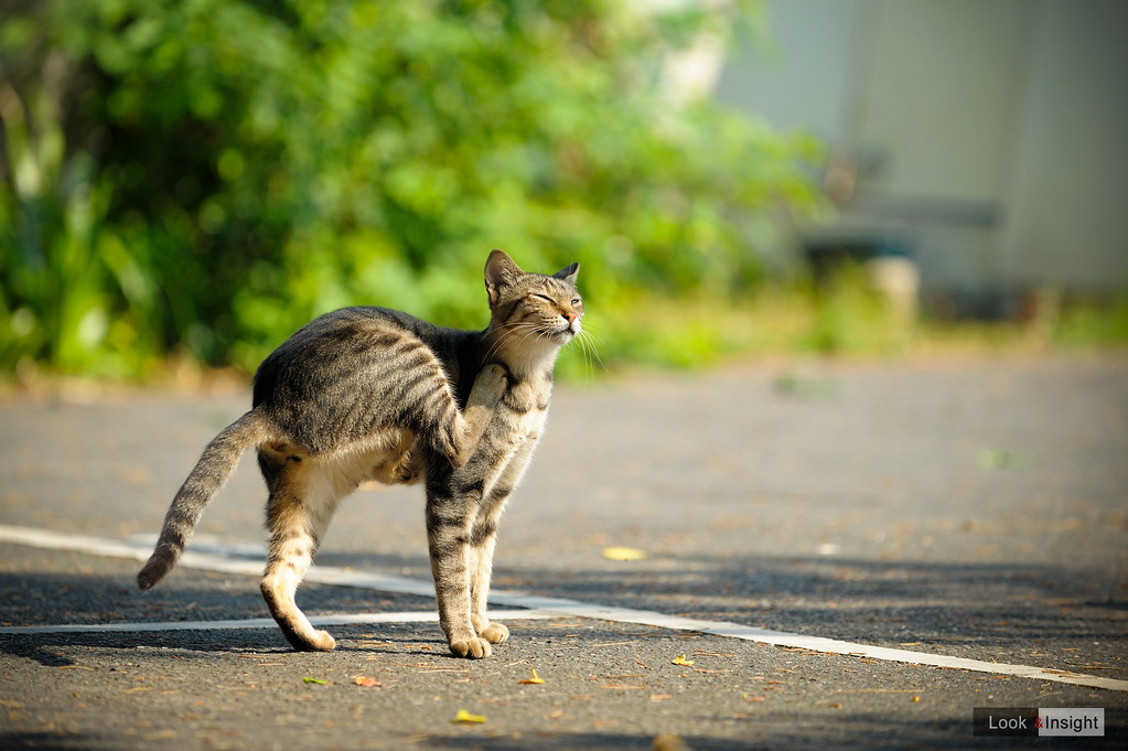 三腳貓...(笑)