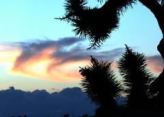 Fiery Desert Sunset (KarenDinino) Tags: california blue sunset red cactus clouds desert