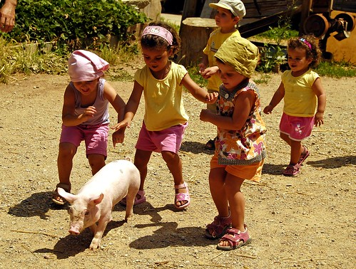 Human children and pig child by surfzone™