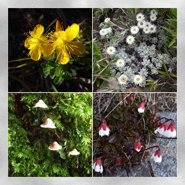較高處的花和沿途都有的菇