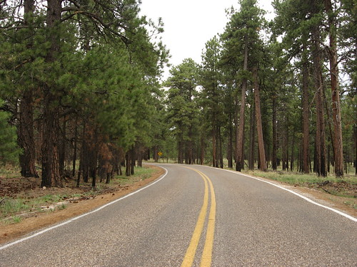 Road to Cape Royal, North Rim, Grand Canyon National Park (8)