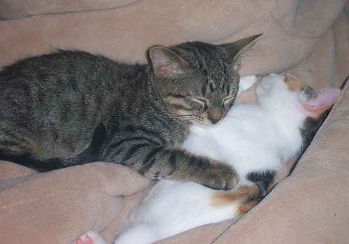 These 2 kitties need a new home because their own passed away.
