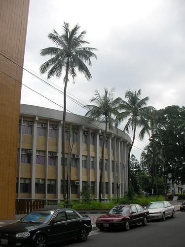 屏教大椰子樹-1.JPG