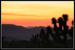 Nipton Nabe (The Wiggidy) Tags: california sunset sky mountains silhouette desert joshuatree mojavedesert i15 nipton