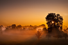 Foggy Sunrise (Stuart Sipahigil) Tags: trees orange nature fog sunrise nikon d700 indurotripod