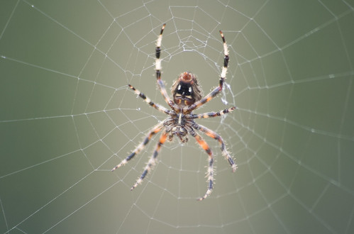 unknown spider_2