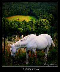 606 White Horse (Nebojsa Mladjenovic) Tags: light summer house mist france color art nature animal fauna digital rural french landscape outdoors caballo cheval lumix frankreich europe burgundy panasonic domestic frankrijk paysage animaux bourgogne francia priroda cavallo whitehorse morvan ete francais fz50 yonne svetlost konj animauxdecompagnie superaplus aplusphoto thesuperbmasterpiece artofimages mladjenovic bestcapturesaoi mygearandmepremium mygearandmebronze mygearandmesilver mygearandmegold mygearandmeplatinum mygearandmediamond
