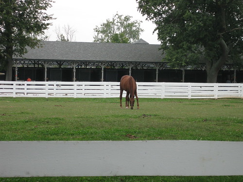 funny cide. Funny Cide in his paddock