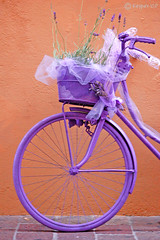 united colors of bicycle (stefano ciccocioppo) Tags: flower bike d50 nikon violet bici fiori viola lavanda keypaz flickrunitedaward