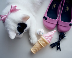 Pink L. (margueritepetite) Tags: pink white ice cat persian cream cupcake icecream chanel amlie