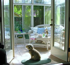 We're Back... (nbklx17 (Sandy)) Tags: pet home interiors september poodle daisy cottagestyle homesweethome sunroom frenchdoors lovelylight myeverydaylife cornersofmyhome whitewicker