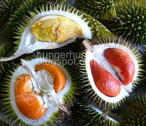wild durians1