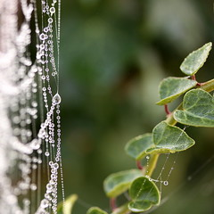 lace curtain (jenny downing) Tags: morning light distortion blur france macro reflection green net wet water leaves fog closeup beads droplets leaf drops blurry shiny veil bright bokeh lace curtain curves foggy earlymorning ivy blurred screen cobweb dew network woven delicate gossamer curved waterdrops lacy netting sparkly voile labyrinth weave waterdroplets beaded lattice damp windowdressing tracery filigree webbing infrance inthegarden entangle netcurtain lacework entrap danslejardin jennypics ensnare enmesh takeninfrance jennydowning goingfortheworldrecordhighestnumberoftags caniaddone photobyjennydowning