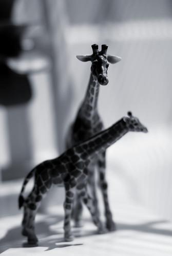 v the animals 090