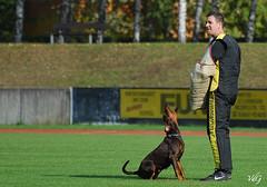Deutsche Meisterschaft VPG (VDG ) Tags: dog pet nikon hund doberman d200 dobermann workingdog vpg deutschemeisterschaft champagneardenne vdg schutzhund