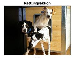 Tierheim Burg bei Magdeburg: Rettungsaktion Schlittenhunde