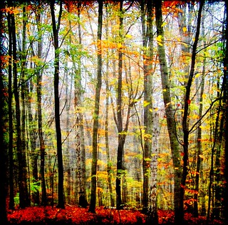 The Forest has many Colors