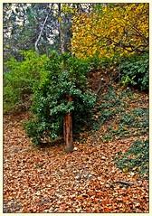 Otoo ( Marco Antonio Soler ) Tags: parque espaa hojas arbol spain nikon alicante 09 otoo jpg 2009 hdr comunidad valenciana alcoy alcoi diciembre tardor alacant d80 preventorio