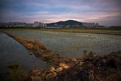 Paddy Fields (Jon Asay ) Tags: sunset field long exposure rice paddy south korea        byeongjeom