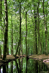 Green wood.... (Astrid Photography.) Tags: wood trees nature water netherlands spring stream veluwe gelderland hulshorst naturesfinest simplybeautiful mywinners hierdensebeek astridphotography goldsealofquality zenenlightenment explorer309