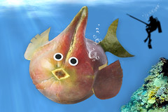 'Never look Back.' (RR) Tags: blue sea food fish playing silly art water goofy fruit fun with humor manga fruta exotic peixe mango mangoes peixinho mangos anthropomorphic mangue playingwithfood spearfishing anthropomorph antropomrfico mangobaum antropomorfico anthropomorphe brincandocomacomidablog